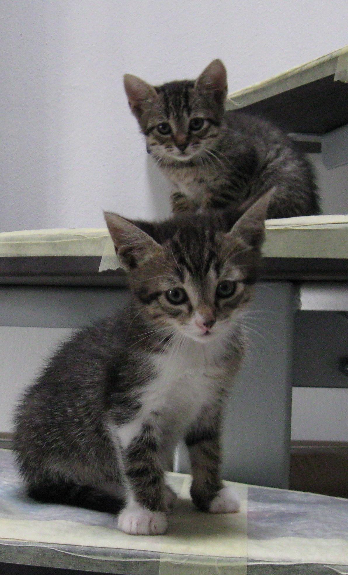 Tsu & Nami da piccolini!
