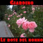Le rose del nonno