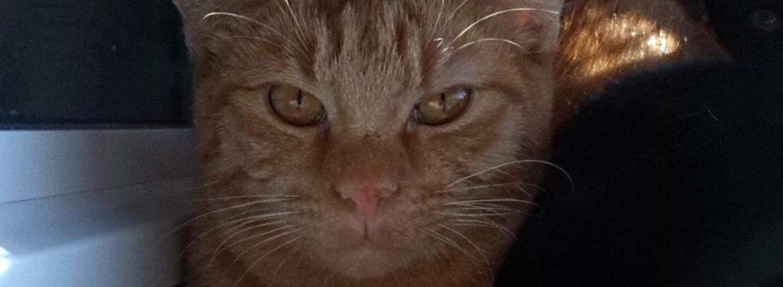 Honda in gattile a cinque mesi