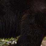 Granny's House @Cogolo 2015: San Romedio e Bruno, l'orso!