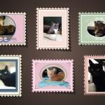 Buona Festa del Gatto 2016!