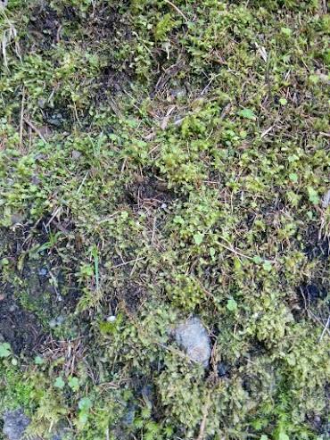Muschio di sfagno-escursione botanica
