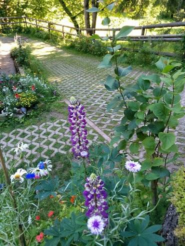Lupino-escursione botanica