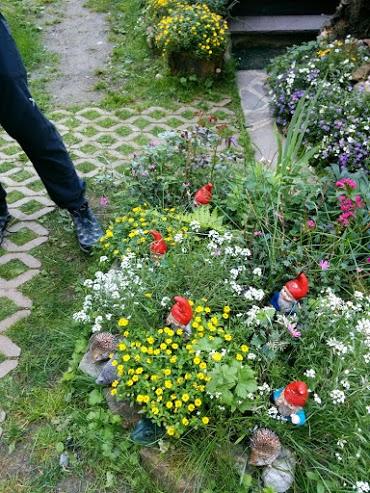 Alisso (il fiore bianco)-escursione botanica