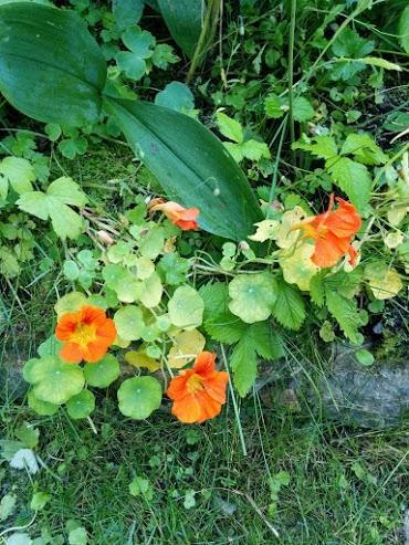 Nasturzio-escursione botanica