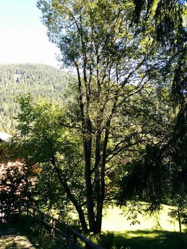 Noce (a sinistra) e Ontano (a destra)-escursione botanica