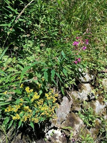 Salcerella-escursione botanica