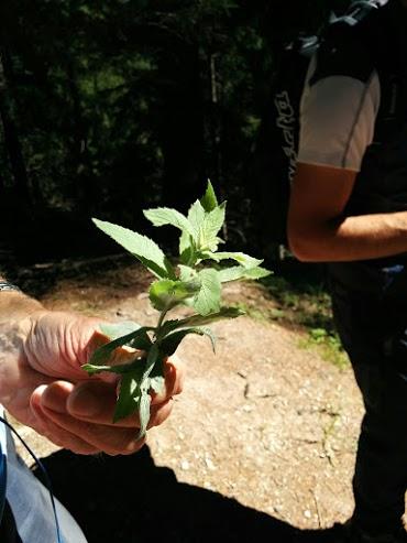 Menta-escursione botanica