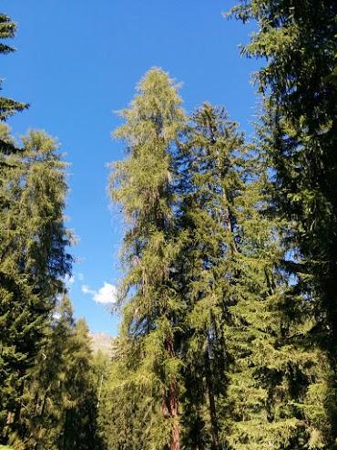 Larice-escursione botanica