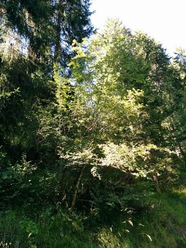 Ontano-escursione botanica