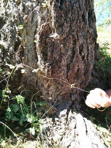 Stolone di fragola-escursione botanica