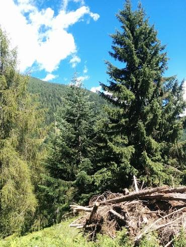 Abete bianco-escursione botanica