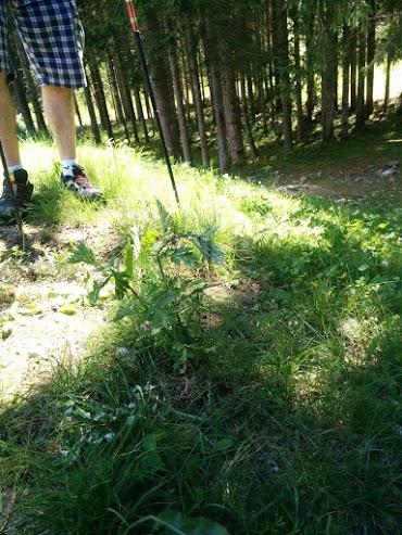 Artemisia-escursione botanica