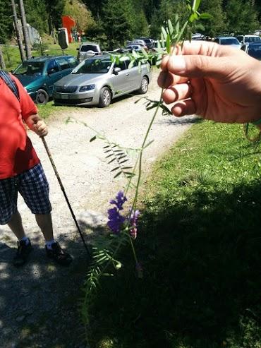 Veccia o viccia-escursione botanica