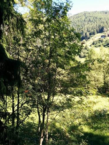 Sorbo degli uccellatori-escursione botanica