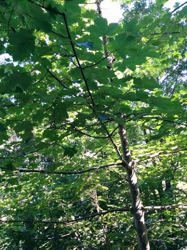 Acero-escursione botanica