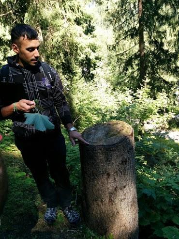 Contare gli anelli per conoscere l'età degli alberi-escursione botanica