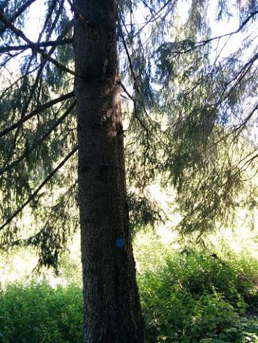 Abete rosso-escursione botanica
