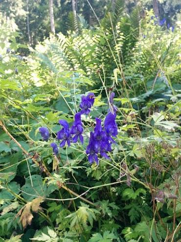 Orchidea-escursione botanica