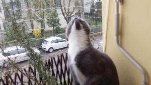 Pippetto Kiri osserva la rete