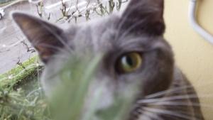 Pippetto Kiri ci osserva