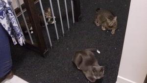Tsu, Nami e Kiri sul tappeto posato sulla copertura