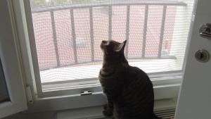 Tsu sta osservando il pannello da vicino