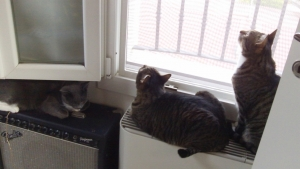 Il trio osserva il pannello